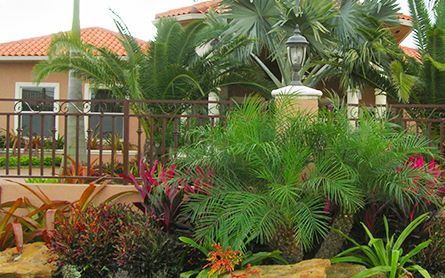 Landscaping in Orlando