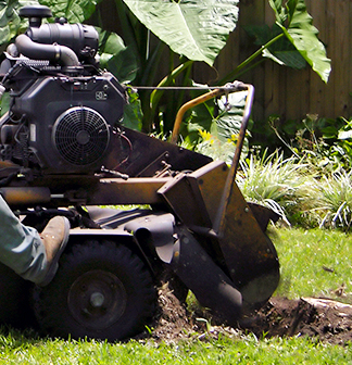 Stump Grinding in Orlando